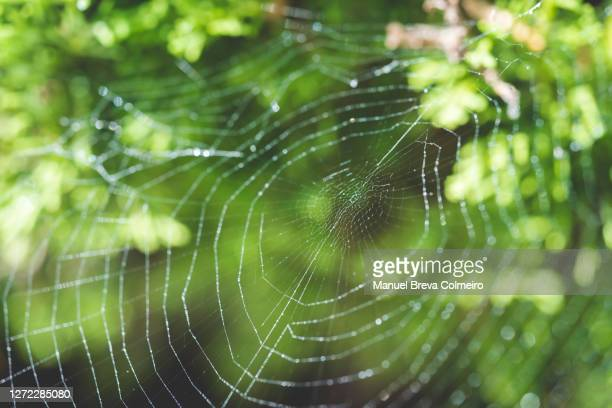 spider web - benicassim stock pictures, royalty-free photos & images