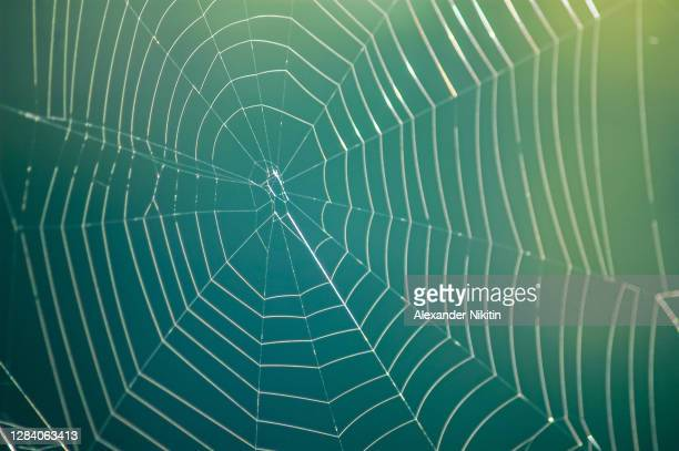 spider web - www stock pictures, royalty-free photos & images
