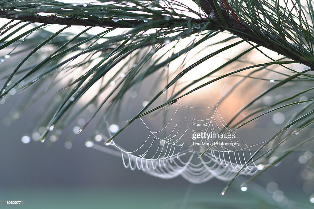 Spider Web : Stock Photo