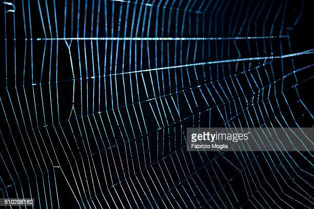 spider web - spider silk stock photos and pictures