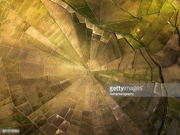 spider web rice fields at lodok cancar village, flores island, indonesia. - paddy field stock pictures, royalty-free photos & images