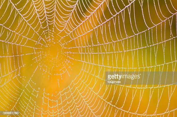 Toile d'araignée avec Fond coloré
