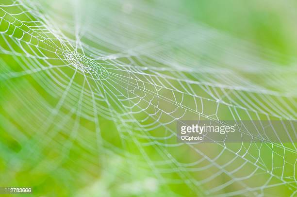 Spider web with dew drops on a green blurred background