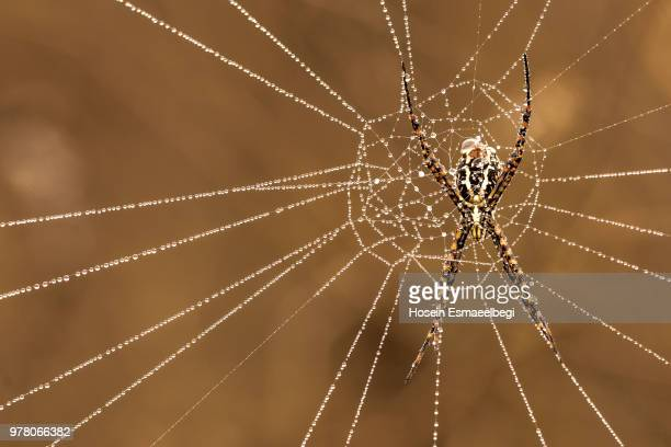 spider web with dew drops - spider silk stock photos and pictures