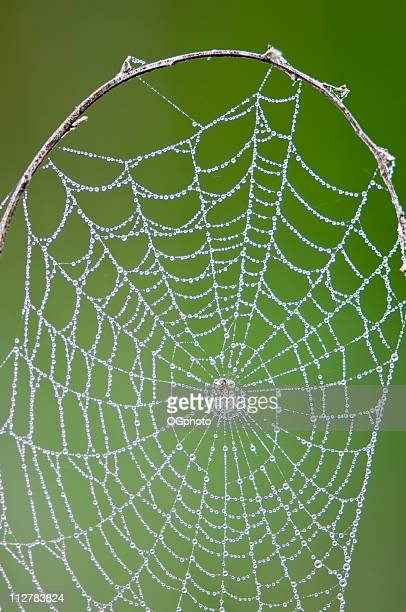 spider web with dew - ogphoto stock pictures, royalty-free photos & images
