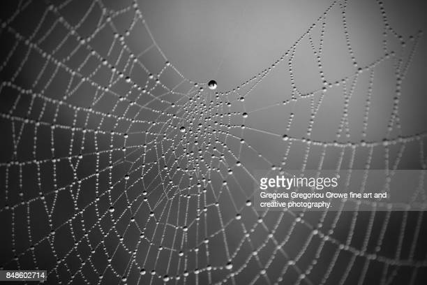 spider web with dew - gregoria gregoriou crowe fine art and creative photography. stock pictures, royalty-free photos & images