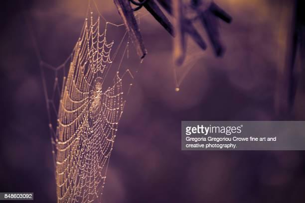 spider web with rain drops - gregoria gregoriou crowe fine art and creative photography stock photos and pictures