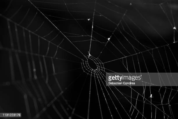 spider web with something to eat, black background,monochrome, romania - ragnatela foto e immagini stock