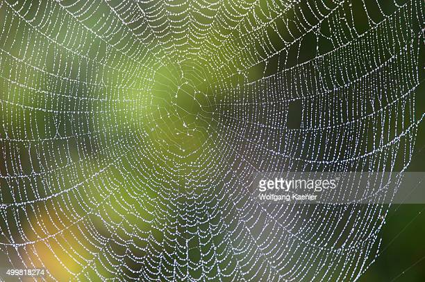 Spider web with water drops after rain at Perinet Reserve Madagascar
