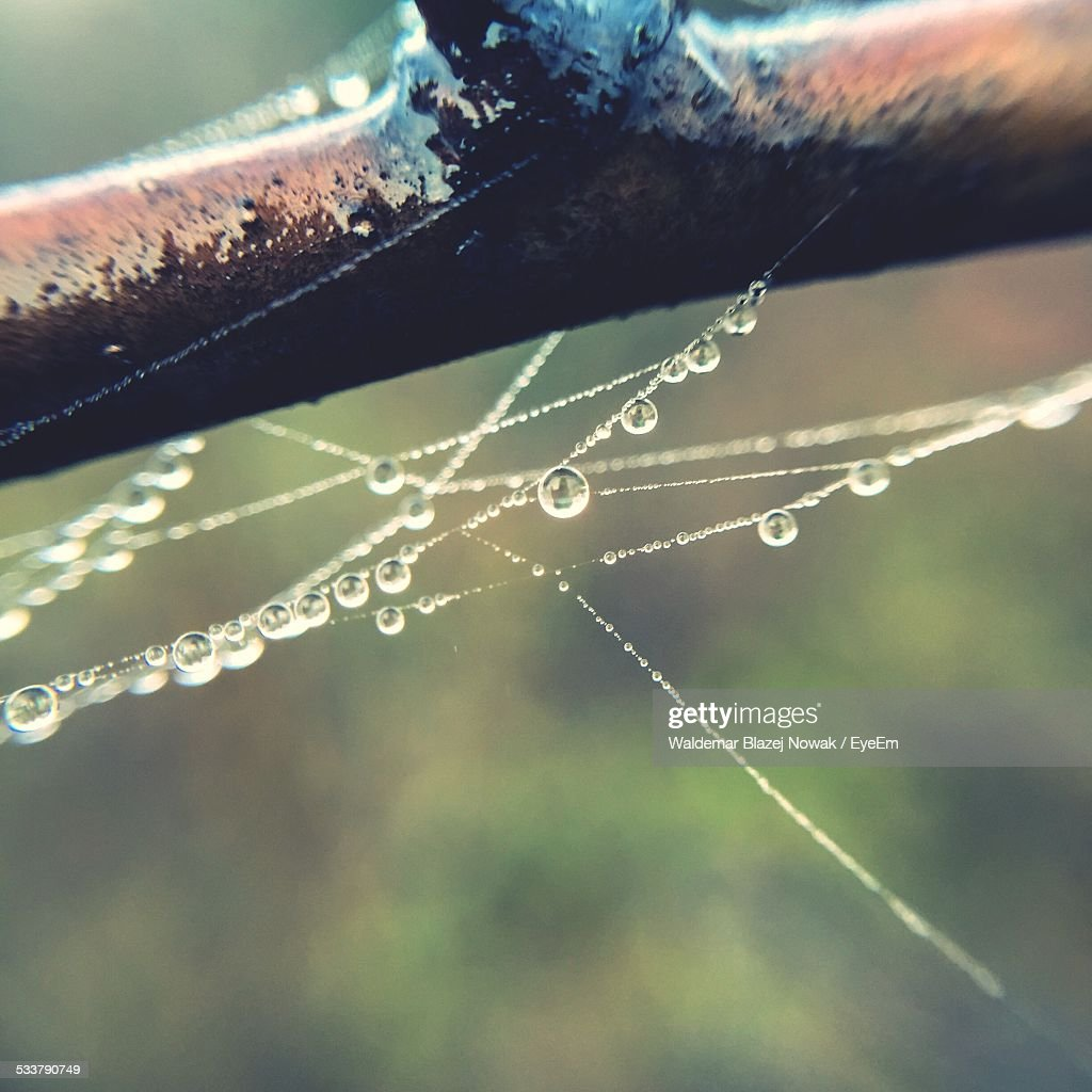 Spider Web With Water Drops On Branch : Foto stock