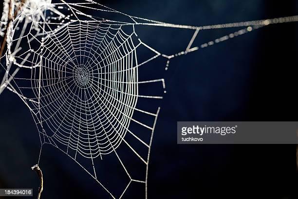 Toile d'araignée. XXXL