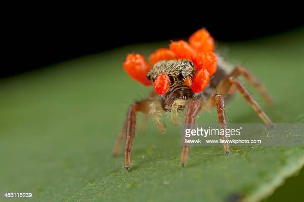 Spider with mites on head