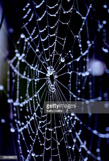 spiders wb hung with dewdrops - kathy shower stock pictures, royalty-free photos & images
