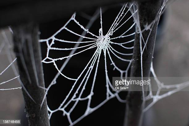 A spider's web is covered in frost in subzero temperatures on February 11 2012 in Huntingdon England Last night the Met Office recorded the coldest...