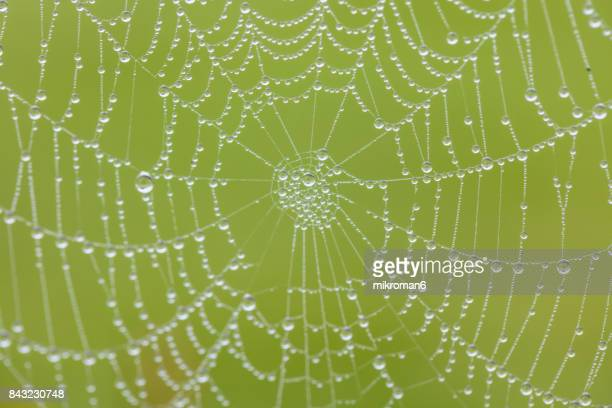 Spiders web on foggy morning