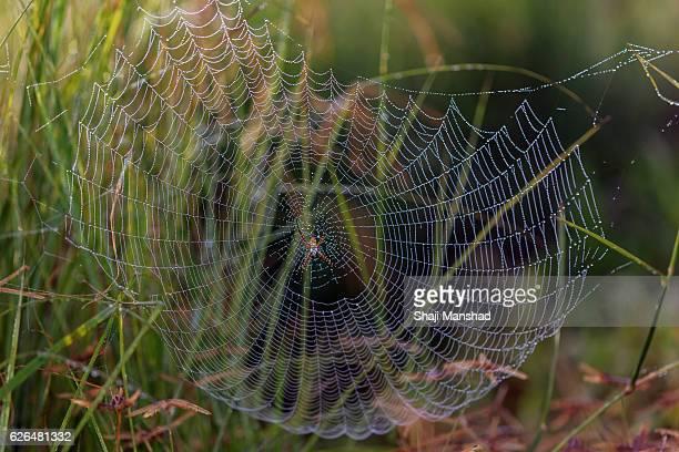 Spiderweb in mist
