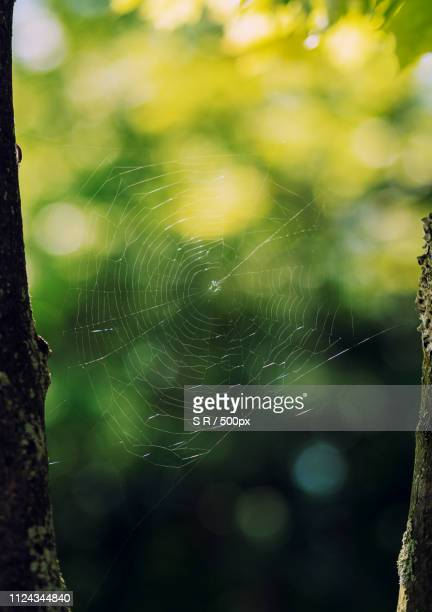 spiderweb in the light - forens stock pictures, royalty-free photos & images