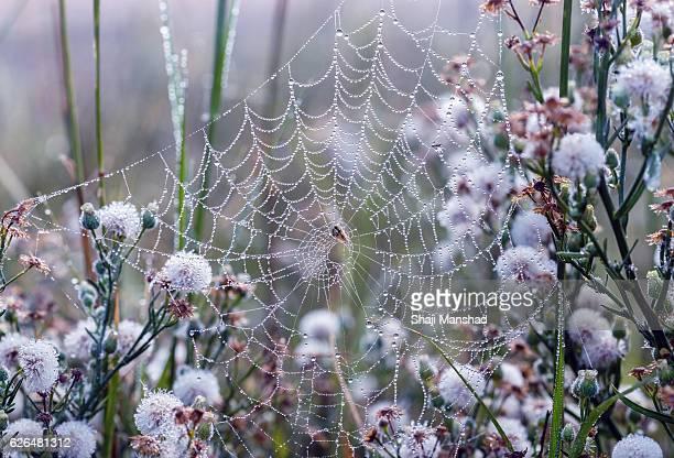 Spiderweb in the mist
