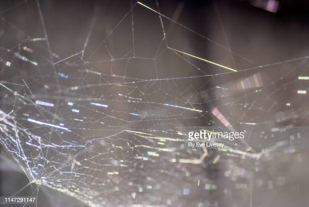 spiderweb - silk stock pictures, royalty-free photos & images