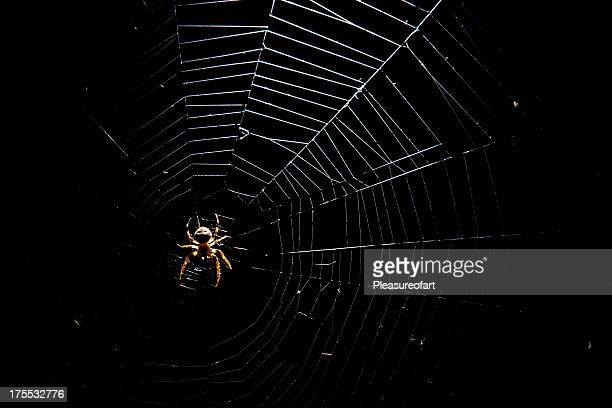 spiderweb - spider stock pictures, royalty-free photos & images