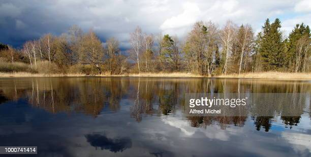 spiegelung am weiher - spiegelung stock pictures, royalty-free photos & images