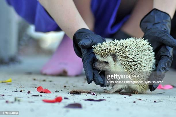Spike the Hedgehog is Feeling Feisty