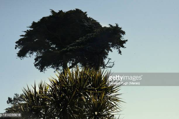 spiky cactus & silhouetted fern-like tree - howard pugh stock pictures, royalty-free photos & images