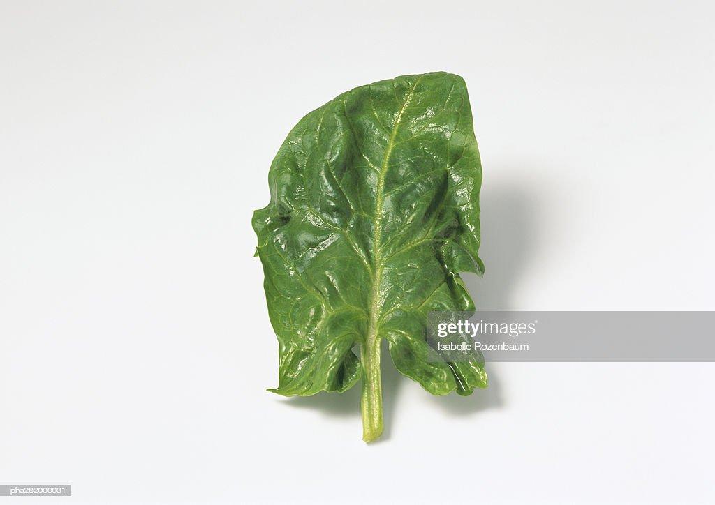 Spinach leaf : Stockfoto