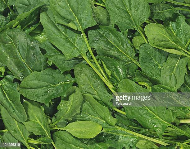 Spinach leaves, Full Frame, high angle view