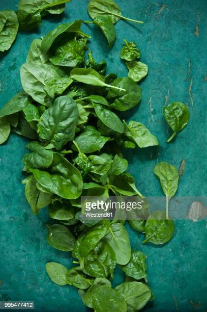 spinach leaves on green background - spinach stock photos and pictures