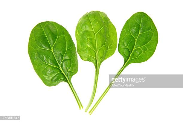 spinach series on white background - spinach stock pictures, royalty-free photos & images