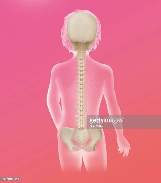 spinal column, anatomy - human vertebra stock pictures, royalty-free photos & images