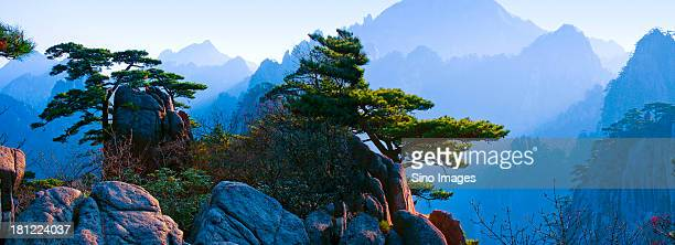 spine in mountain top,mount huangshan - lotus flower peak stock pictures, royalty-free photos & images