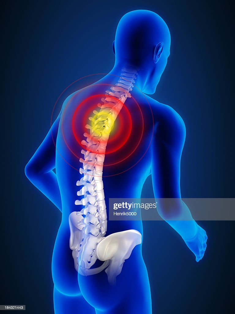 Spine Inside Human Body Stock Photo | Getty Images