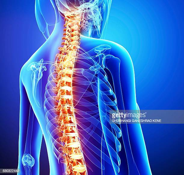 spine pain, computer artwork. - human vertebra stock pictures, royalty-free photos & images