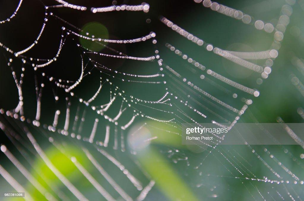 Spinnennetz mit frischem Morgentau : Stock-Foto