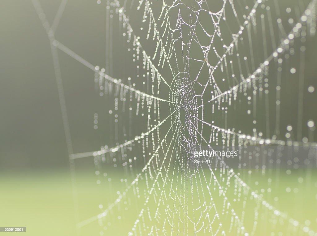 Spinnennetz : Foto de stock