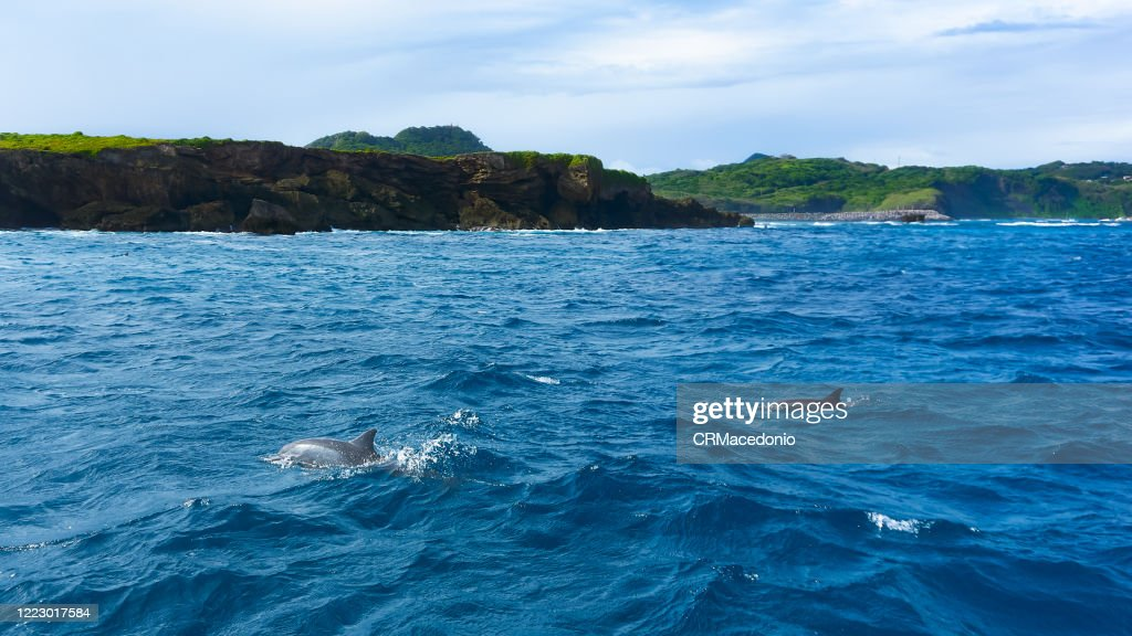 Spinner dolphins in Dolphin Bay. : Stock Photo