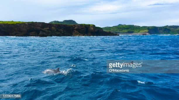 spinner dolphins in dolphin bay. - crmacedonio stock pictures, royalty-free photos & images