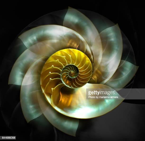 spinning nautilus - nautilus stock pictures, royalty-free photos & images