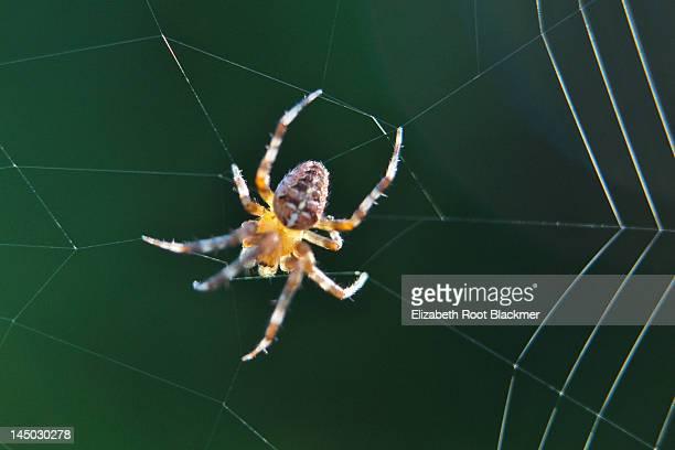 Spinning web