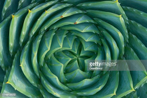 spiral aloe - spiral stock pictures, royalty-free photos & images