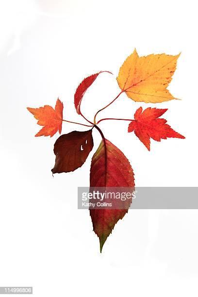 spiral of mixed autumn leaves - kathy self fotografías e imágenes de stock