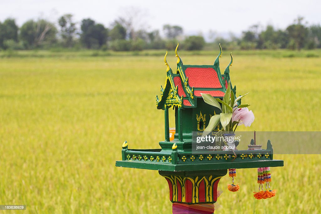 A Spirit House in a rice field : Stock Photo