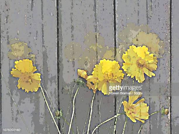 spiritflowers - noreen braman stock pictures, royalty-free photos & images