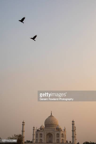 spiritual taj mahal - celebrity death stock pictures, royalty-free photos & images