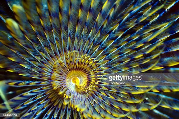 Spirograph underwater