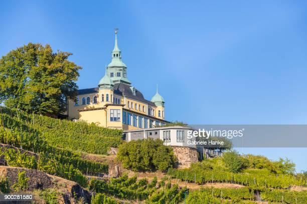 Spitzhaus in vineyard, scarps of Oberloessnitz, Radebeul, Saxony, Germany