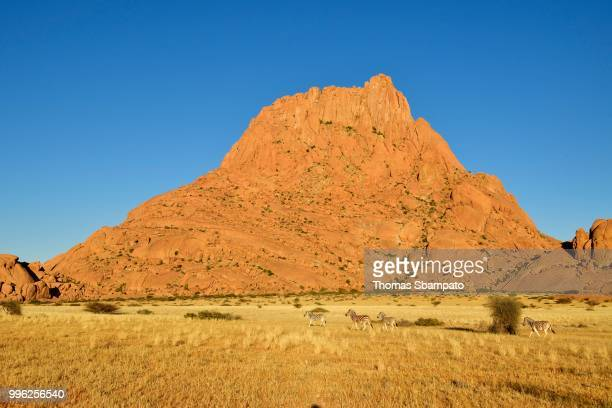 Spitzkoppe in the morning with zebras grazing in front of the mountain, Erongo region, Damaraland, Namibia