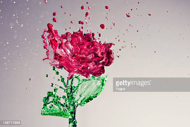 Splash of rose